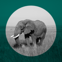 featured-elephant-only