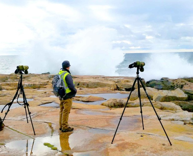 Data-Science-Acadia-National-Park-Day-2-observing-birds-LG-P